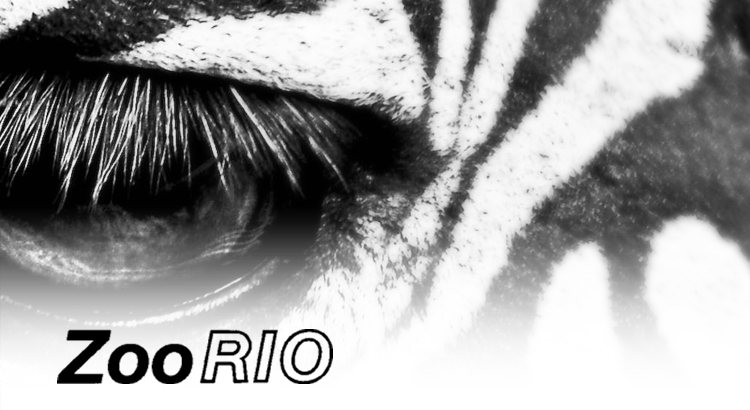 Zoo Rio